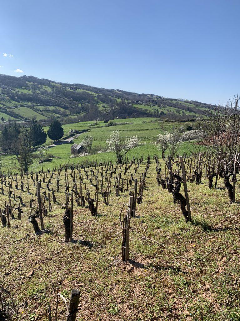 Vignoble AOC de Marcillac