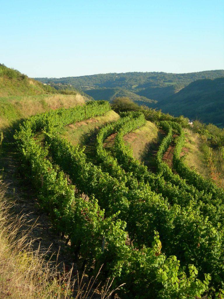 Vignes AOC Marcillac