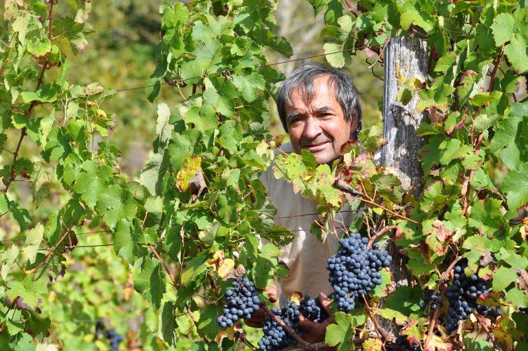 Vignoble de Marcillac